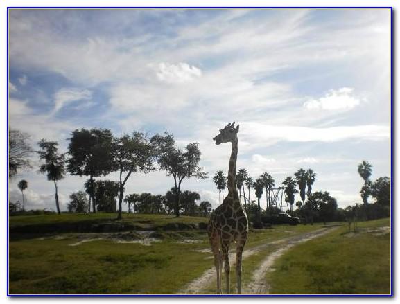 Busch Gardens Tampa Map 2012