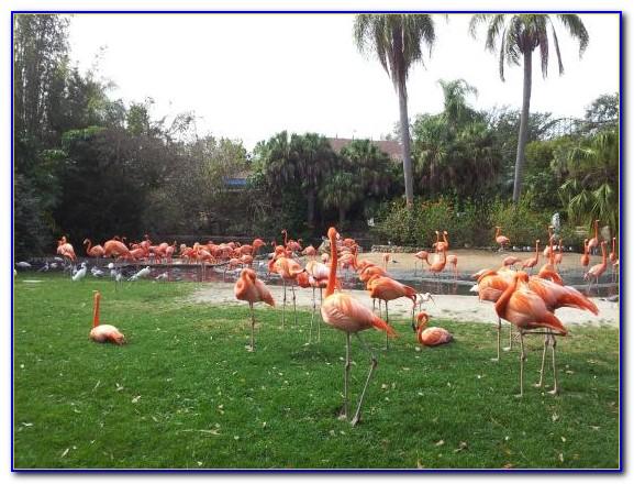 Busch Gardens Tampa Map 2014