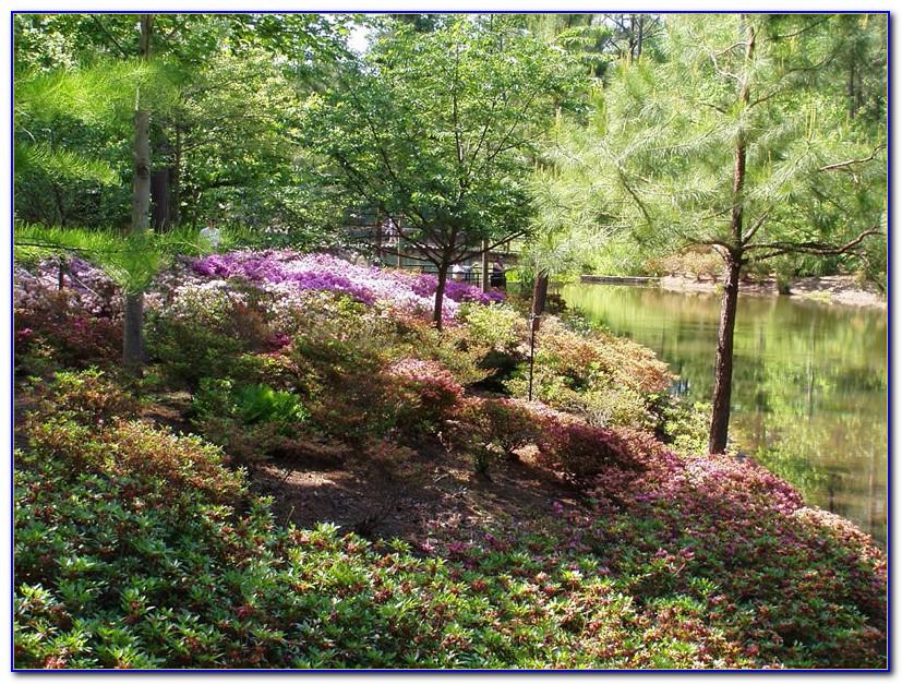 Callaway Gardens Pine Mountain Ga Weather
