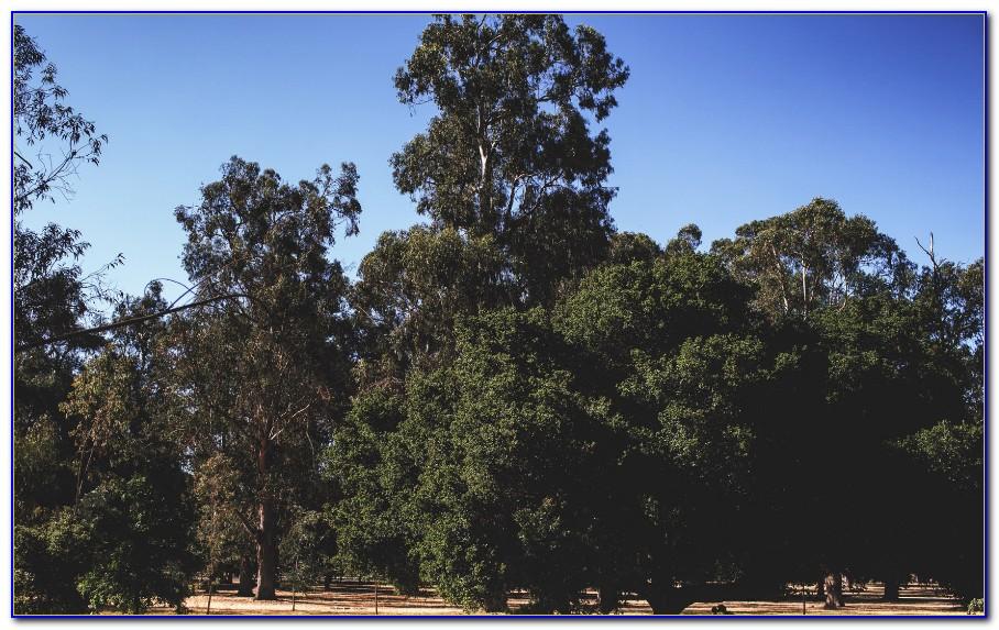 Garden Court Hotel Palo Alto Fitness