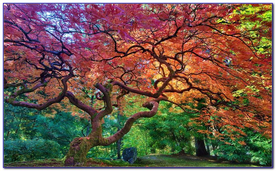 Japanese Garden Portland Oregon Coupon