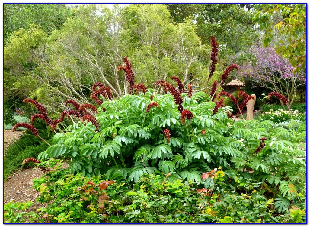 San Luis Obispo Botanical Garden Summer Camp