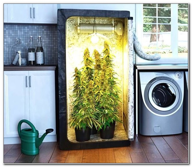 Build Your Own Grow Box Uk