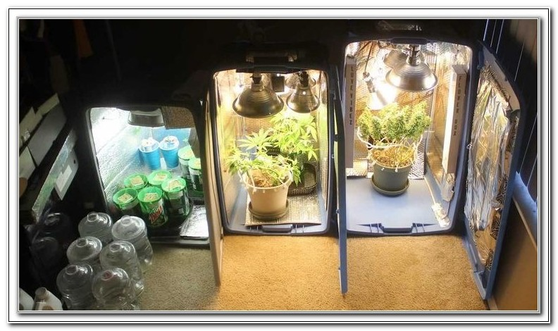Build Your Own Grow Box