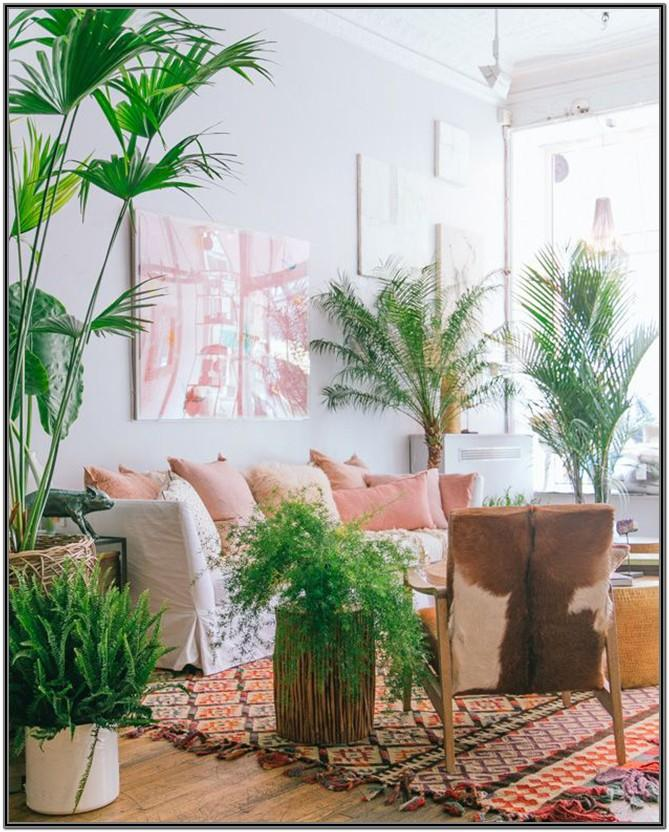 Large Living Room Plants