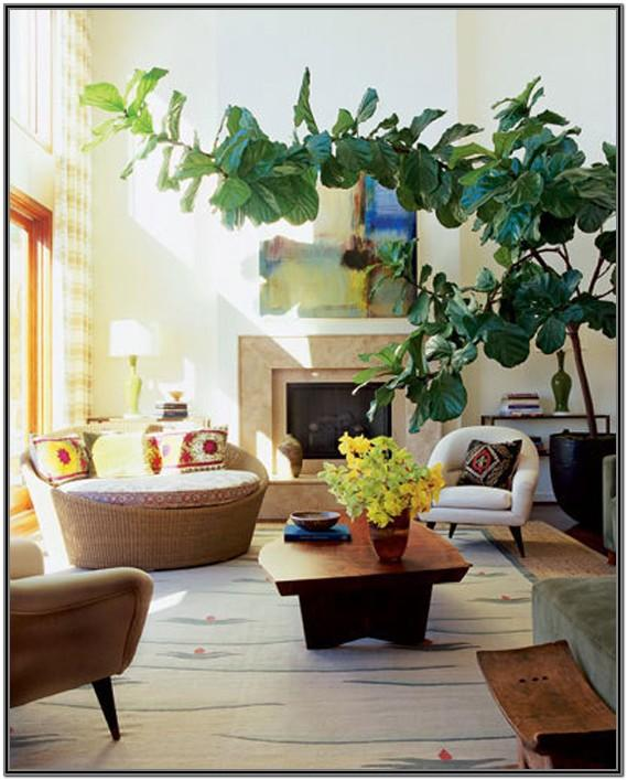Living Room Large Indoor Plants