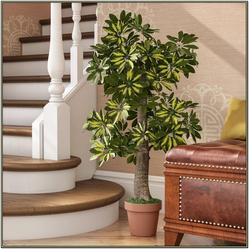 Best Fake Trees For Living Room