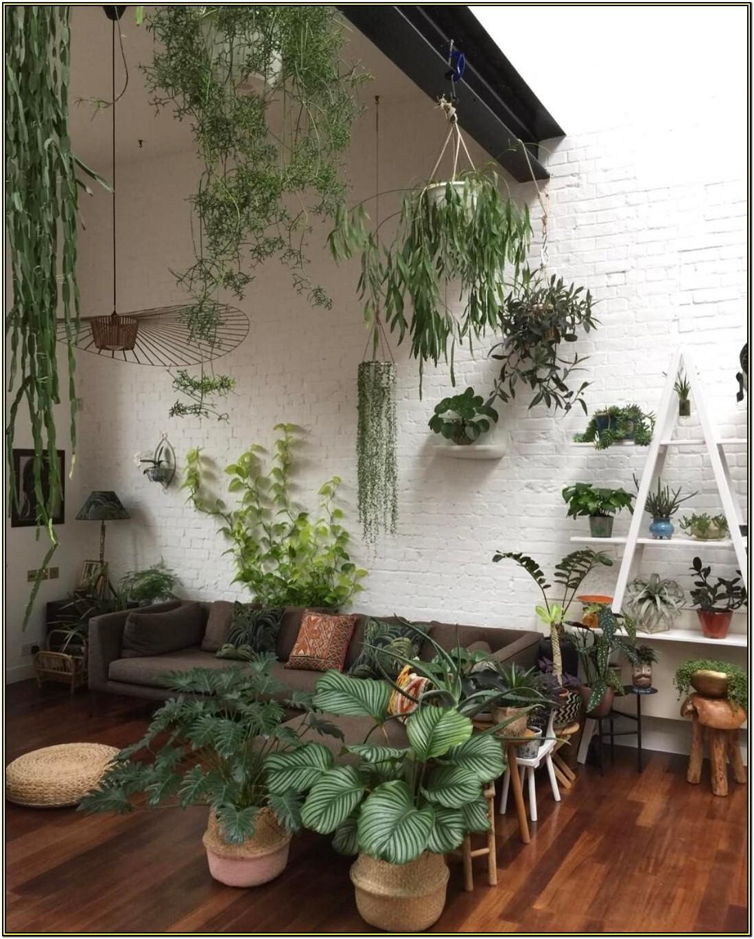 Interior Best Indoor Plants For Living Room