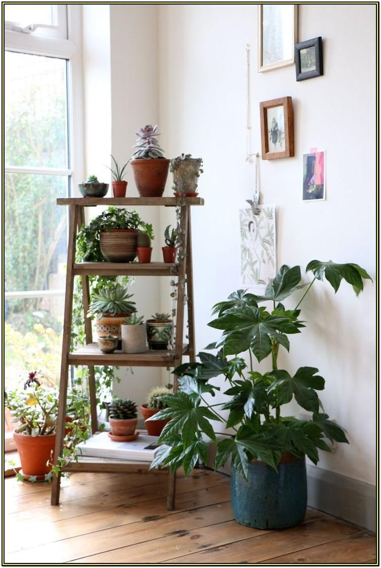 Stylish Best Indoor Plants For Living Room