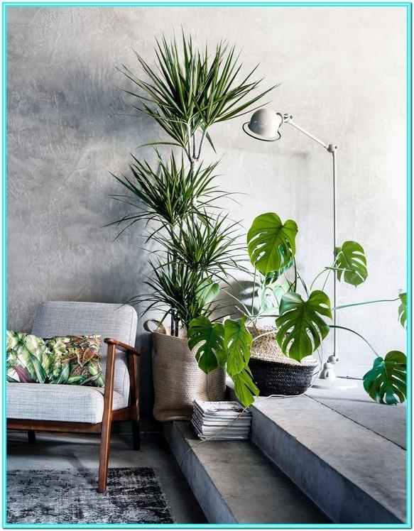 Living Room Floor Plants Indoor