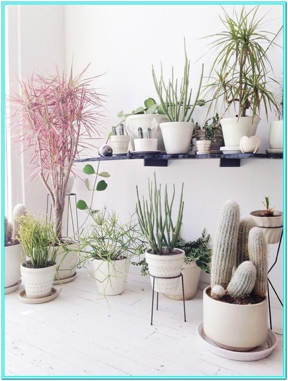 Living Room Indoor Plants Design