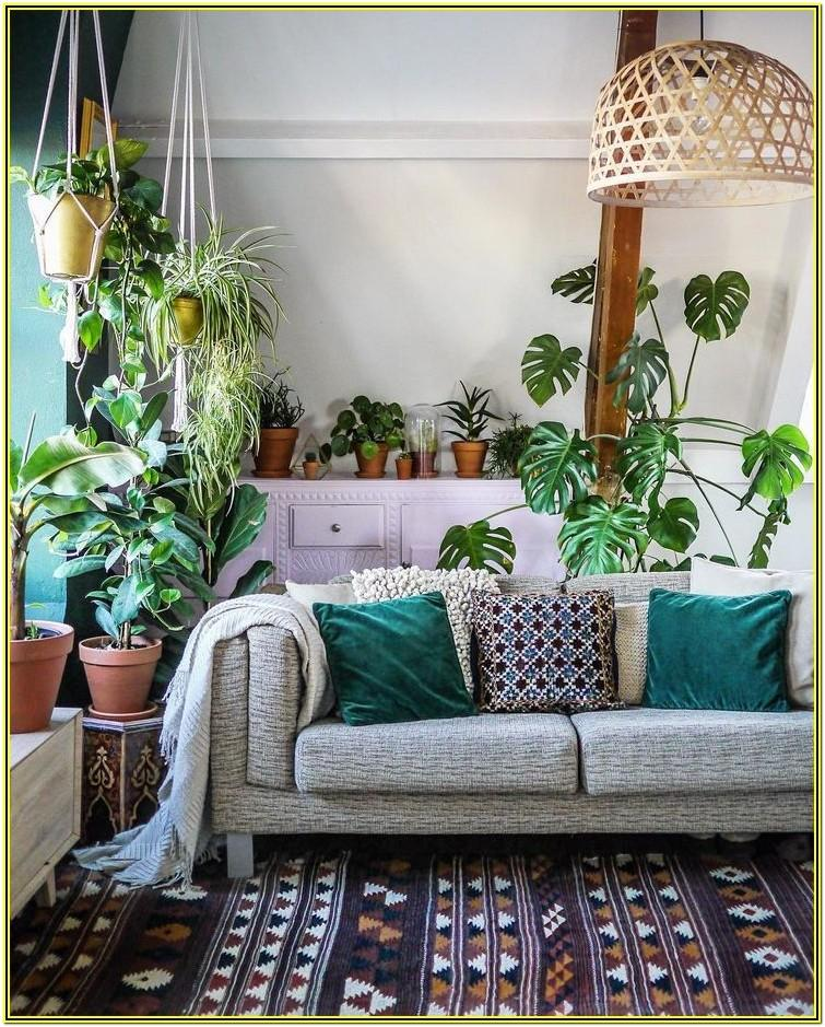 Contemporary Living Room Ideas With Plants