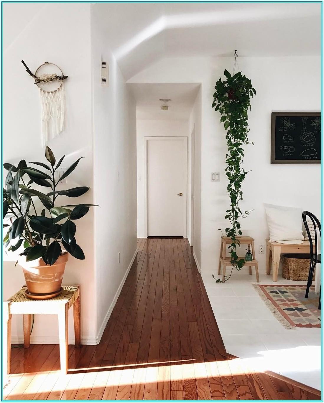 Hanging Plants Living Room Ideas