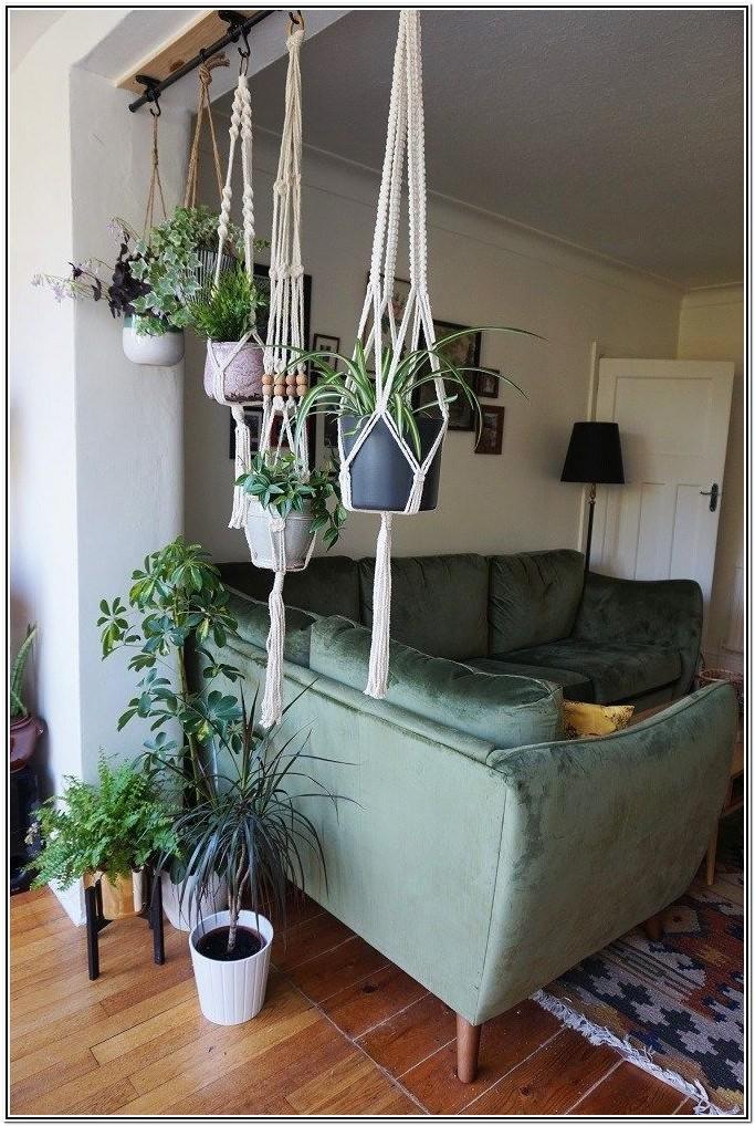 Living Room Indoor Trees Living Room Indoor Plant Ideas