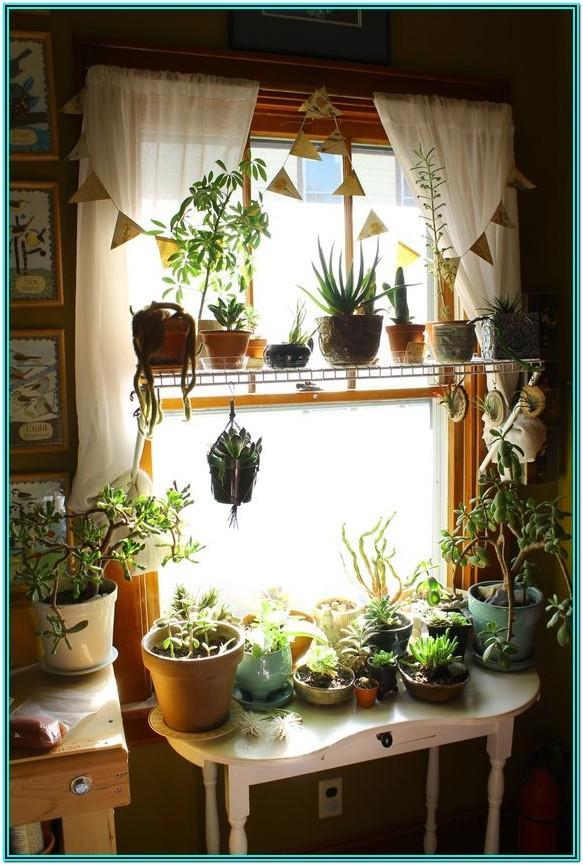 Living Room Plants Decoration Ideas