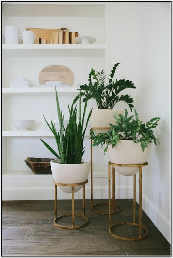 Pinterest Living Room Ideas Plants