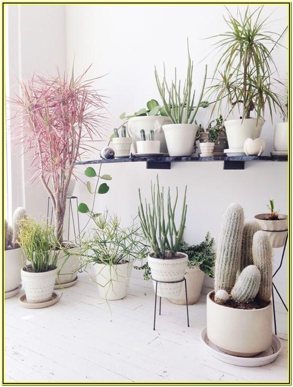 Simple Living Room Ideas With Plants