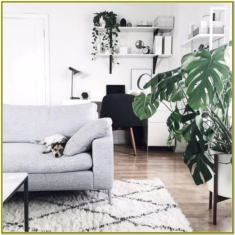 White Living Room Ideas With Plants