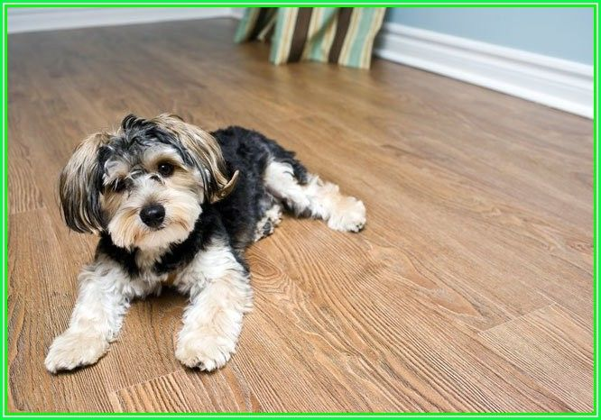 Is Cork Flooring Durable With Dogs