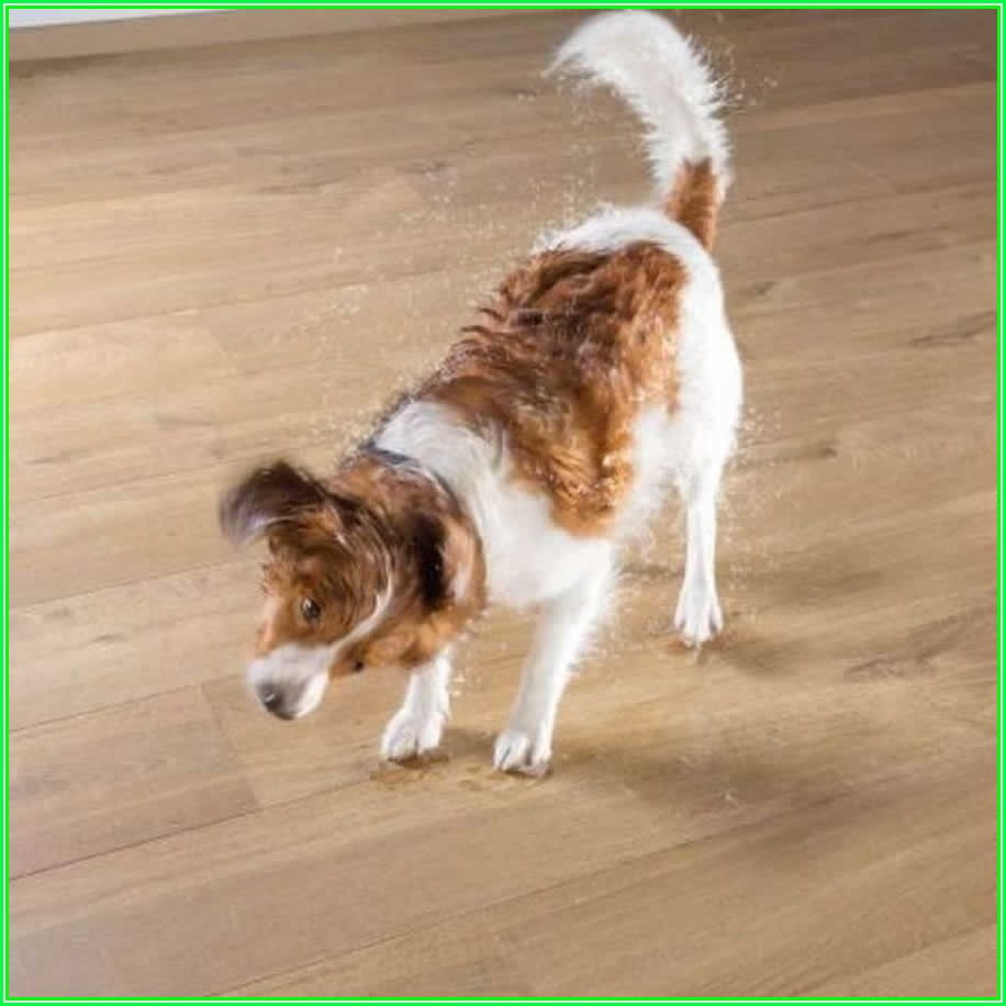 Is Laminate Flooring Good For Pets