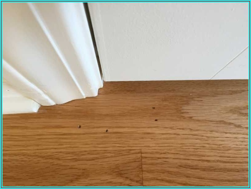 What Causes Holes In Hardwood Floors