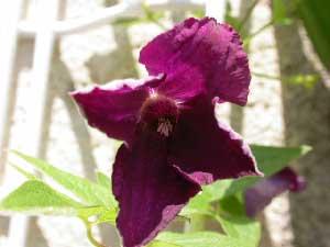 photo clem violet juin  - copie