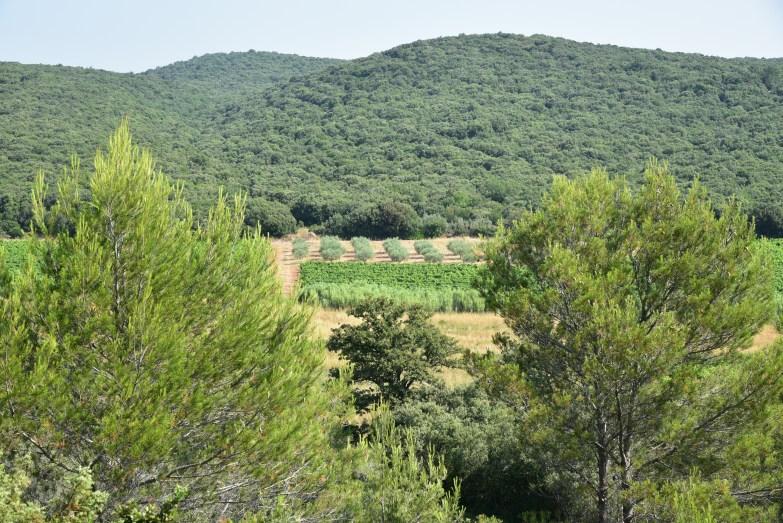 Clos Constantin Terrasses du Larzac