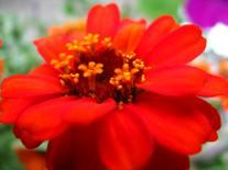 flowers! 2012 032