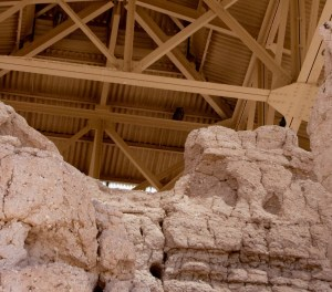 owls roosting at Casa Grande Ruins National Monument