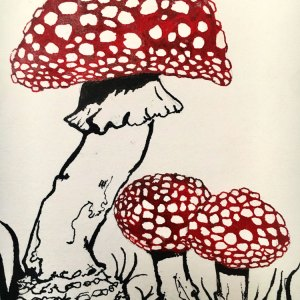 Mushroom Drawing Flay Agaric Art Amanita Muscaria mounted artwork