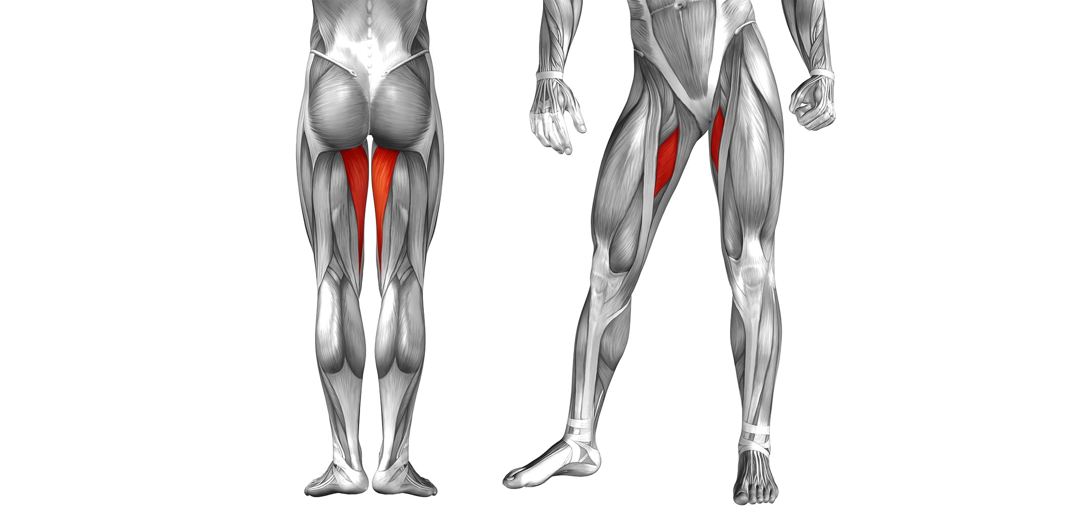 This Overcompensation Can Lead To Tight Adductor Muscles