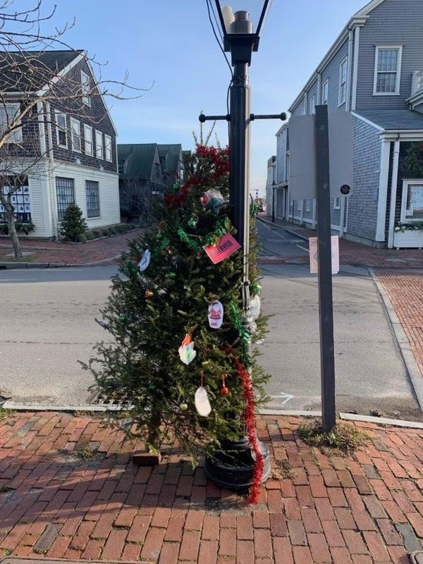 Donated Tree In Nantucket