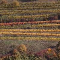 Colours of the Wachau