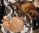 kattenopstoel.jpg