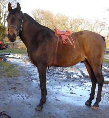 mini_saddle2.jpg