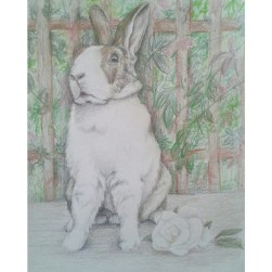 Illustrative Style Soft Focus Drawing of Rabbit In garden, Pet Portrait from 2014, by Clouded Ideas (Aoife Stokes) Faber Castelle