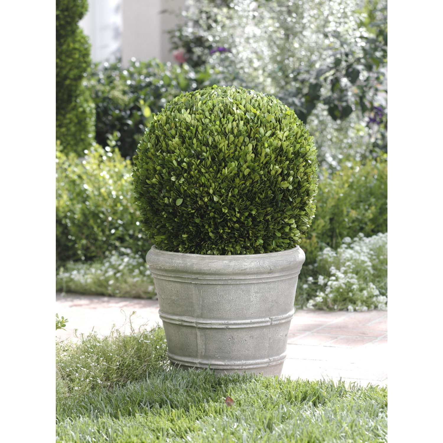 Single Potted Ball Boxwood Topiary OJCommerce