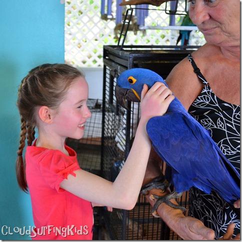Charlotte Amalie Skyride Bird Show Fun