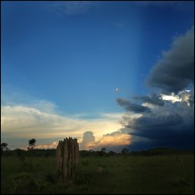 Crepuscular rays over termite field CG