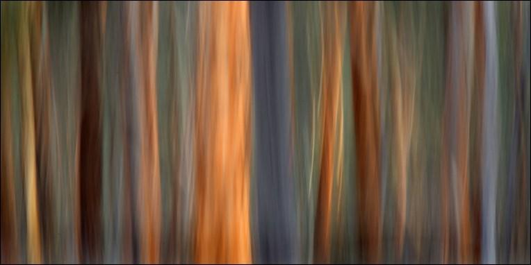 Dryandra woodland1CG