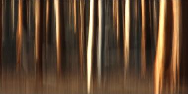 Dryandra woodland5CG