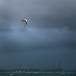 Flying into the storm