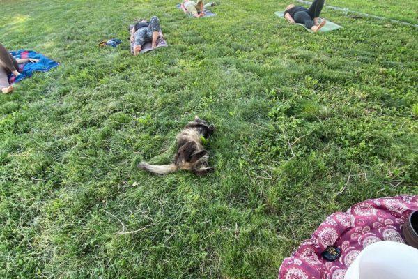 yoga on farm2