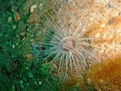 Lundy Sealife (14)