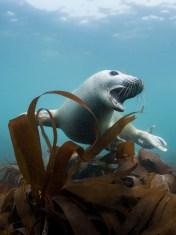 Lundy Seal Nick Blake 17