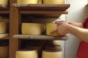 Anthony turning wheels of cheese