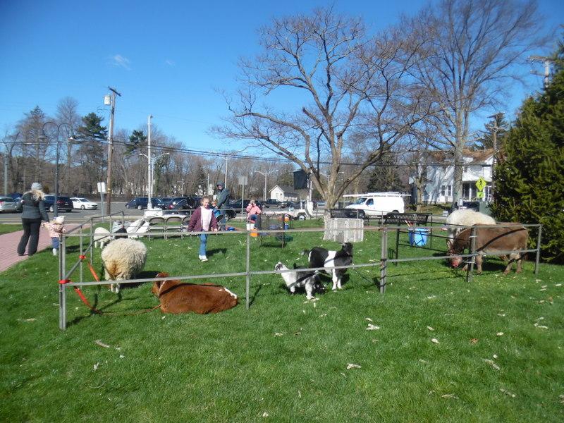 Philadelphia Traveling Petting Zoos For Birthday Parties