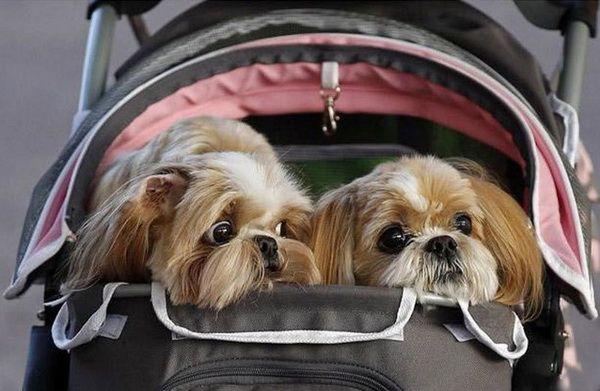 40026dd7307ef Vývoz psa do zahraničia sa uskutoční bez nepríjemností a nežiaducich  prekvapení len vtedy, ak sa jeho majiteľ vopred pýta na pravidlá dovozu a  údržby ...