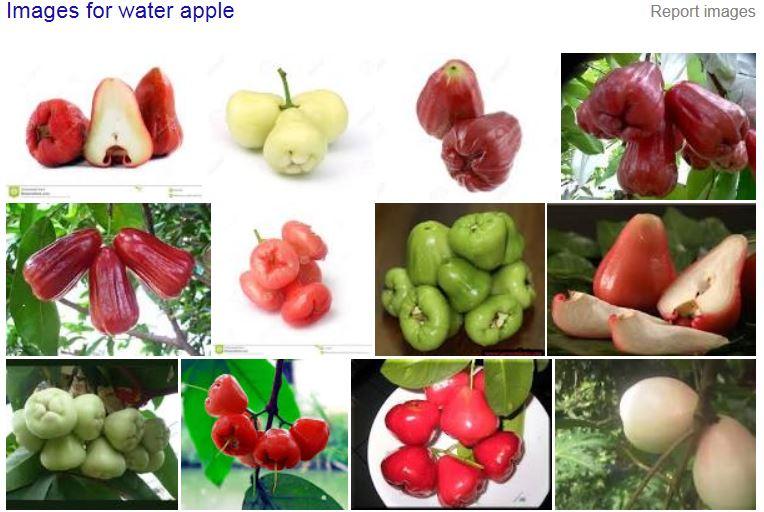 water apple ima