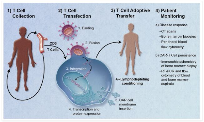 cell therapy